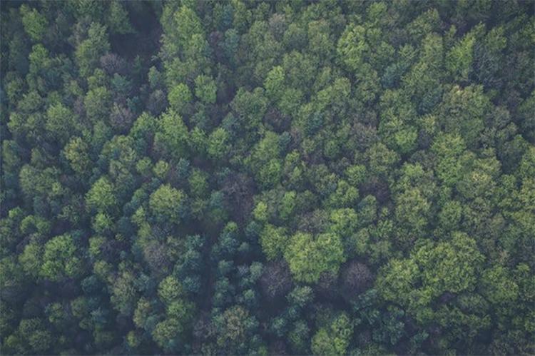 Metsänhenki: kokoontumisaiheideoita