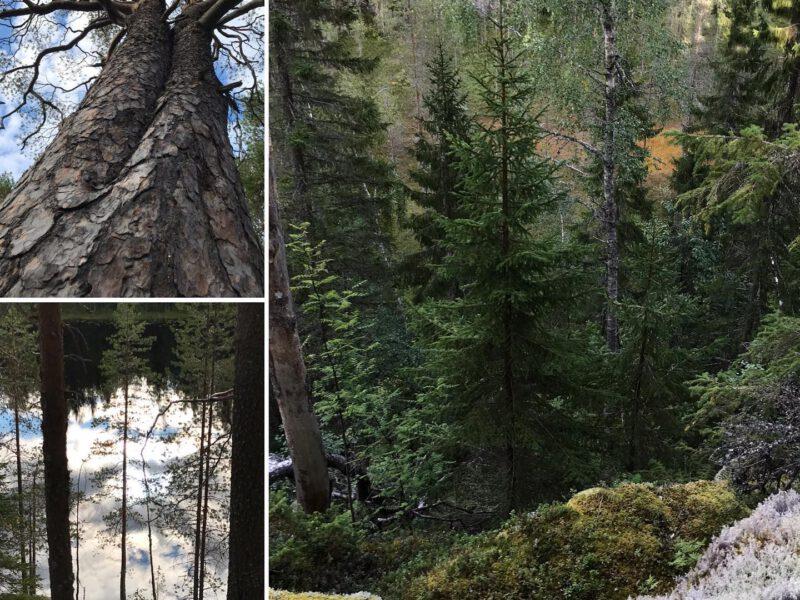 Metsän henki -seminaarin tallenne