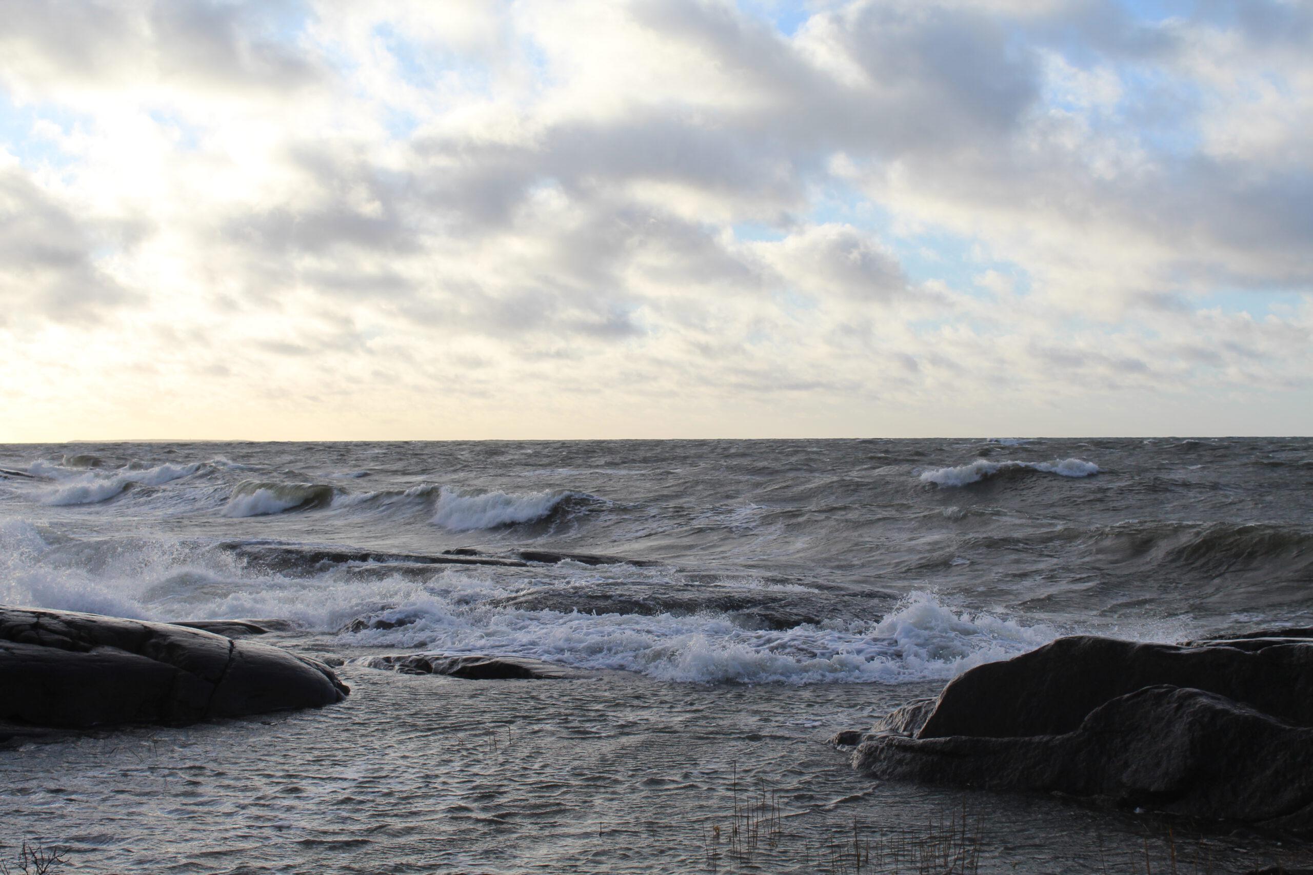 Teema 2021: Metsän henki – Veden voima
